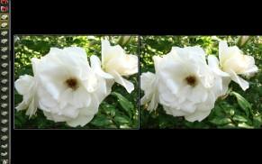 compare_many_1.jpg